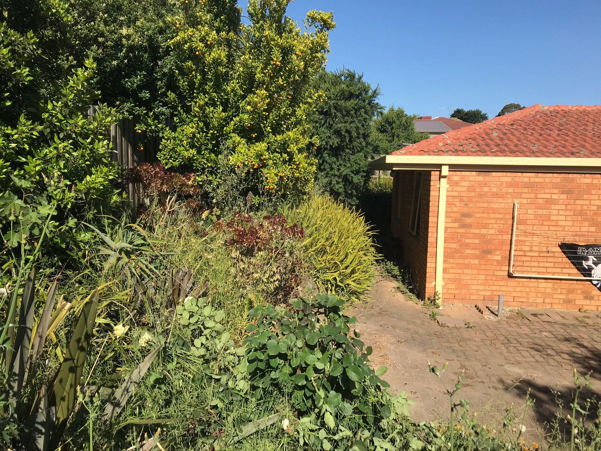 Redoing the Backyard